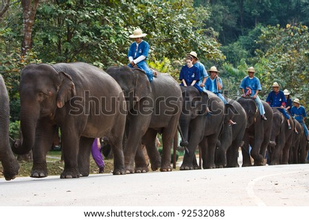 LAMPANG, THAILAND - DEC. 12:  Daily elephant show  at The Thai Elephant Conservation Center (TECC),mahouts and elephants show how to walk in order, December 12, 2011 in Lampang, Thailand.