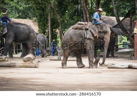 LAMPANG, THAILAND - JUNE 8 : Daily elephant show at The Thai Elephant Conservation Center (TECC), Mahout show how to train elephant in forestry industry. June 8 ,2015 in Lampang, Thailand. #286416170