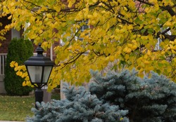 Lamppost on street surrounded by beautiful fall colours