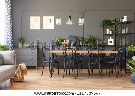 Lamps above wooden dining table and black chairs in grey open space interior with plants. Real photo #1117589567