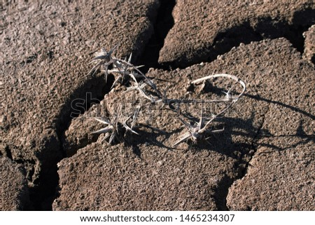 Land after a drought, chapped ground. Unusual heat, frequent droughts, total aridization, desert advancing as a consequence of climate change, global warming