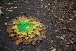 Land art of multicolored autumn leaves gradient on the ground in the forest. Creative natural mandala. Browns, yellows and greens colors.