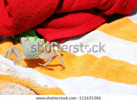 Land crab on a bath towel