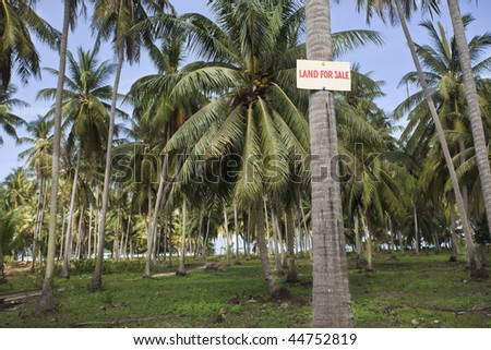 Land for sale sign on a palm tree. Thailand.