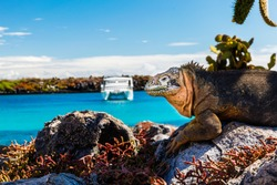 land iguana with a white boat in the background, South Plaza Island, Galapagos
