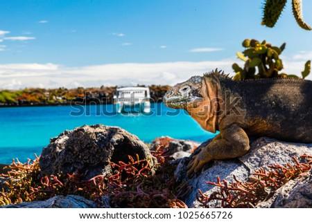 land iguana with a white boat...