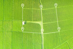 Land or landscape of green field in aerial view. Plot of land on earth for agriculture farm, farmland or plantation with texture pattern of crop, rice, paddy. Rural area with nature at countryside.