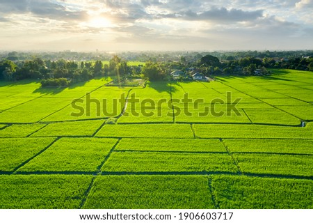 Land plot in aerial view. Include landscape, green field, crop, agricultural plant. Tract of land for housing subdivision, residential, development, owned, sale, rent, buy or investment in Chiang Mai.