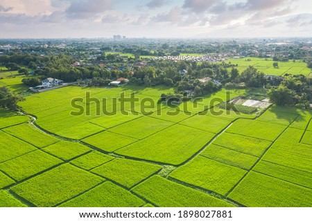 Land plot, land lot. Consist of aerial view of landscape, green field, agricultural plant, crop and ridge. Tract of land for cultivate, owned, sale, development, rent, buy or investment in Chiang Mai.