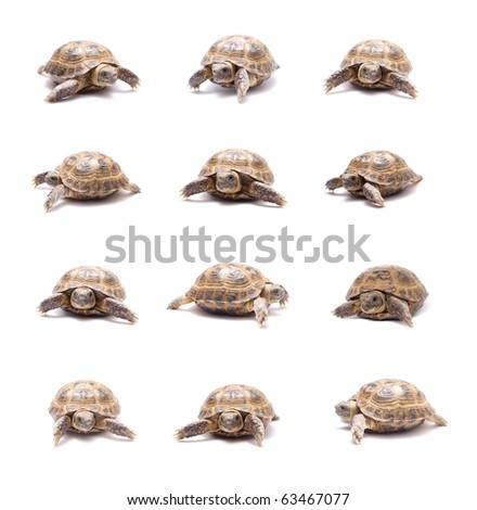 land tortoise, sand a little on a white background