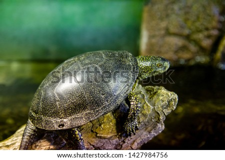 land turtle sits on a stone with its head sticking out #1427984756