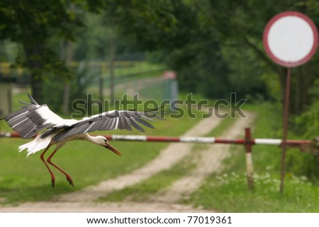 Landing bird, stork, Reserve South Poland