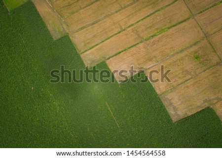landscape abstract  background over top view details and surface row like ladder of Agriculture area are corn fields and rice fields of farmer in the rain season in Thailand