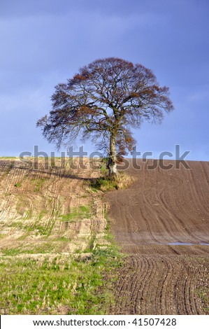 landscape and tree in Co.Carlow, Ireland