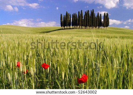 Landscape around Siena called Crete Senesi Siena Tuscany Italy