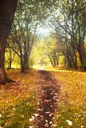 Landscape. Autumn wood