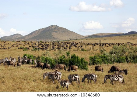 Landscape Background of Animal Herds on the Masai mara