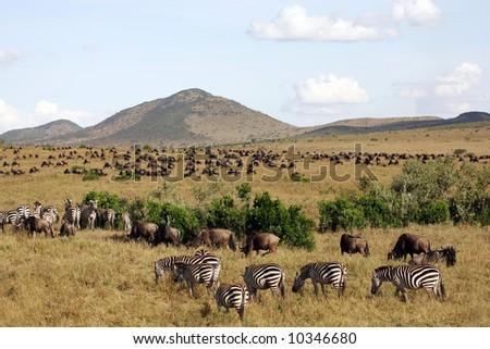 Landscape Background of Animal Herds on the Masai mara