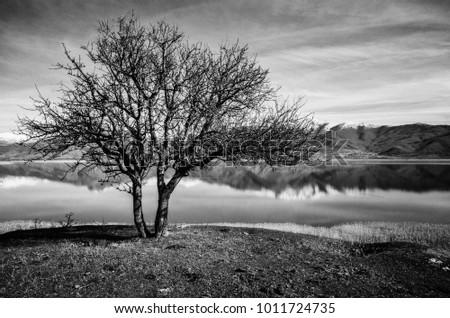 Landscape Black And White Tree Ez Canvas
