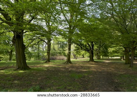 Stock Photo Landscape Composition Of A Dense Forest Of Trees In The