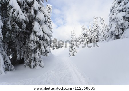 Landscape covered with fresh snow