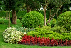 landscape design flowerbed with red flowers and green bushes with trees in the summer garden.