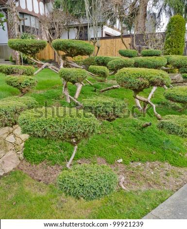 Landscape design. Nicely trimmed bushes at the front yard