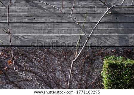 landscape design treatments which marge the concrete slab with natural roots Photo stock ©