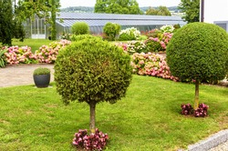 Landscape design with plants, flowers and topiary at residential house in Reichenau Island, Germany. Nice landscaping home garden near Constance Lake. Scenic view of beautiful landscaped backyard.