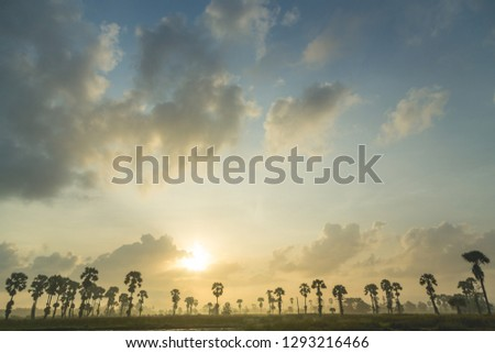 Landscape during sunset in nature and silhouette sugar palm trees #1293216466