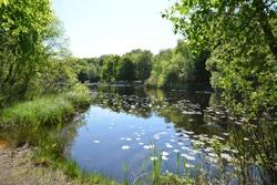 Landscape, Epping Forest