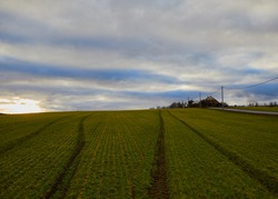 Landscape. Evening. Green-yellow field. The track. Dark blue sky. Gray clouds. The setting sun. Road. Power line. A small house in the distance. Trees.