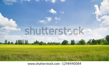 landscape farmland​ in summer day #1298440084