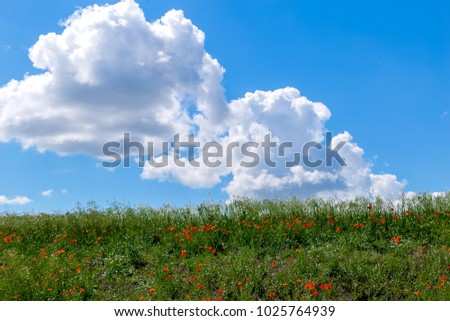Landscape field with red poppies against the background of mountains and clouds #1025764939