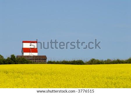 Landscape, grain elevator in canola field - stock photo