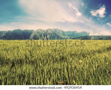 landscape grassland field with...