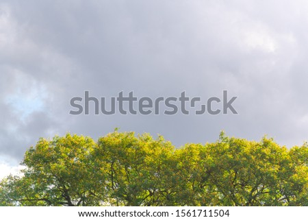 Landscape. Heavy and heavy clouds that foretell the arrival of rain. Autumn season in the south of Brazil. #1561711504