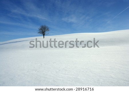 Landscape image of a snowy meadow with one tree.