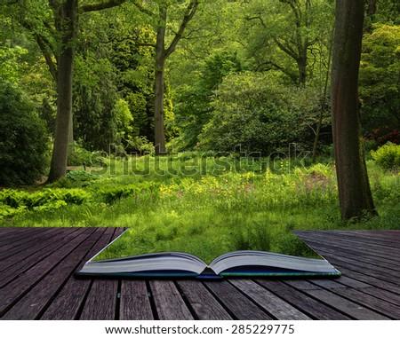 Landscape image of vibrant lush green forest woodland scene conceptual book image