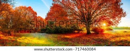 Landscape in autumn with big oak tree