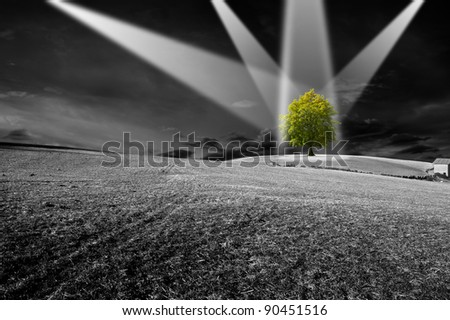 Landscape in black and white with green tree - the concept of ecology