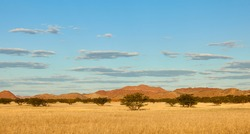 Landscape in Damaraland, Namibia, with beautiful brown rocks and savannah with acacia trees.
