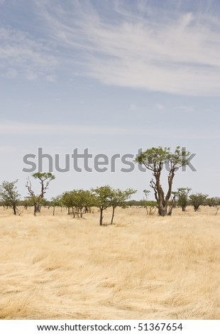 Landscape in Etosha National Park, Republic of Namibia, Southern Africa