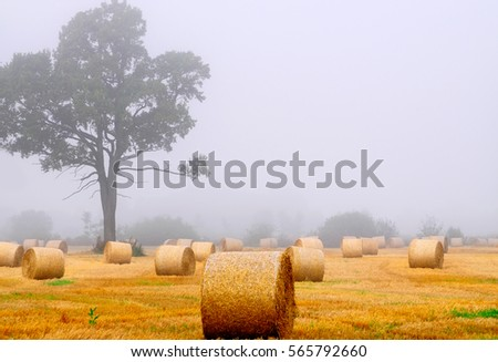 landscape in fog  landscape in fog  landscape in fog #565792660