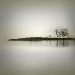 Landscape in sepia tones with isolated trees