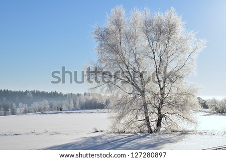 Landscape in winter and tree branches covered with white frost