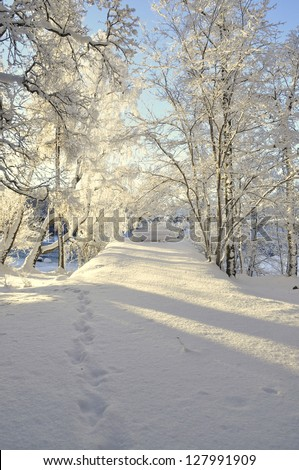 Landscape in winter and tree branches covered with white frost in sunrise