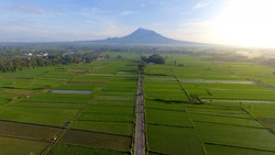 Landscape Indonesia Yogyakarta, Aerial agriculture in rice fields Merapi mountain view in the morning