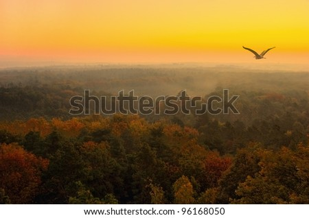 Landscape - morning, at sunrise, photographed from the tower