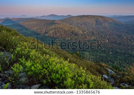 Landscape mountain during sunrise. Mild foggy haze under the peaks. Clearly green bilberry shrub in the foreground. #1335865676